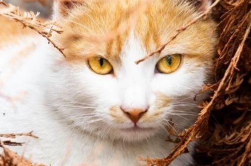 ¿Cuántos años viven los gatos?