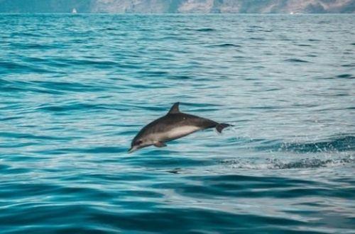 Cómo se reproduce el delfín