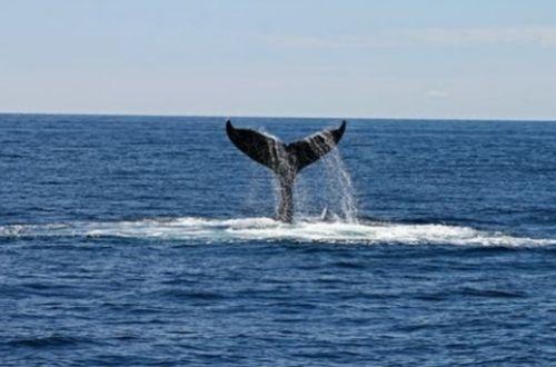 Cuál es el animal más grande del mundo