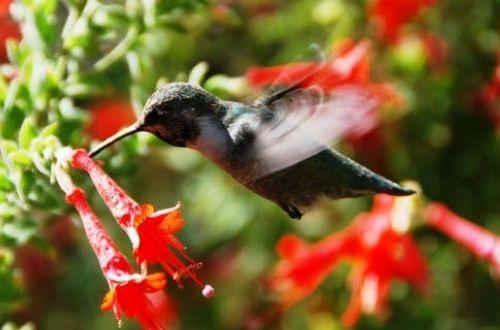 Características más representativas del colibrí