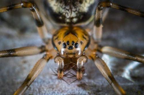 La gran visión de cada especia de araña