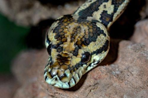 Nutrición y mecanismos de defensa de las serpientes