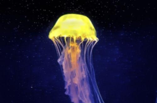 Qué son las medusas