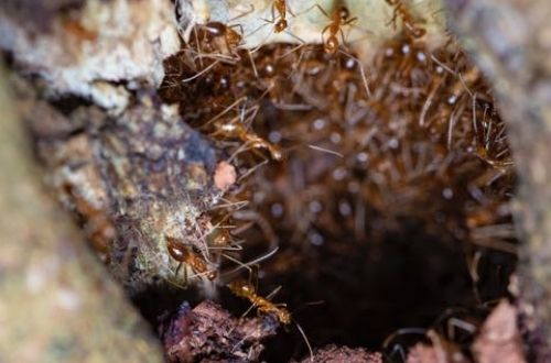 Las hormigas en los sueños, importantes significados
