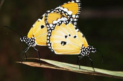 Las mariposas y su significado de acuerdo al color