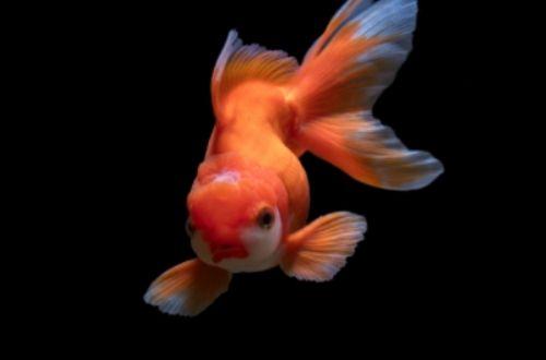 Los peces toman agua