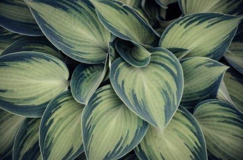 Principales cuidados para mantener plantas en casa
