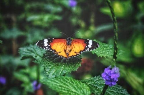 Qué significado tiene soñar con mariposas