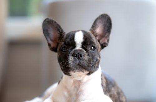Recomendaciones para mantener en buenas condiciones el pelaje de tu perro