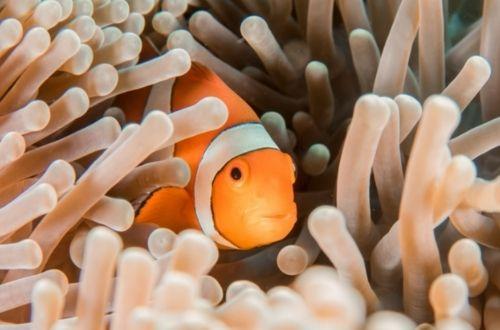 Reproducción vivípara en peces