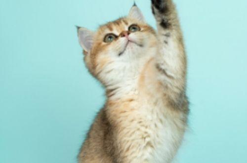 Síntomas de deshidratación en gatos