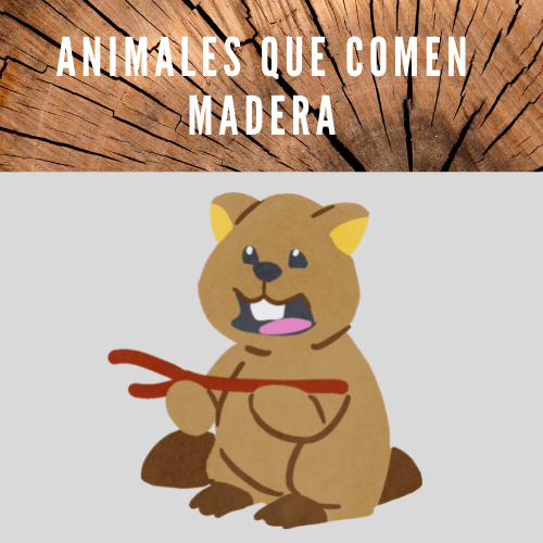 Animales que comen madera