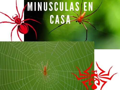 Arañas rojas minusculas en casa