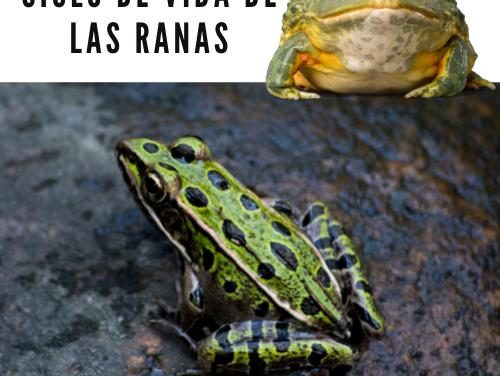 Ciclo de vida de las ranas