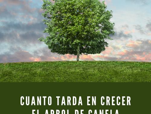 Cuánto Tarda en Crecer el Árbol de Canela