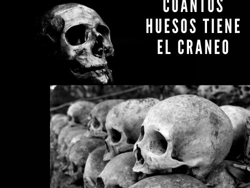 Cuántos Huesos Tiene el Cráneo