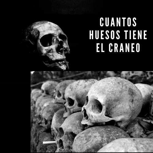 Cuantos huesos tiene el craneo
