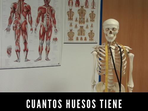 Cuántos Huesos Tiene un Adulto
