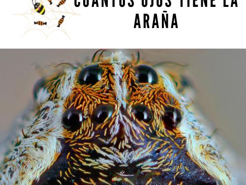Cuántos ojos tiene la araña