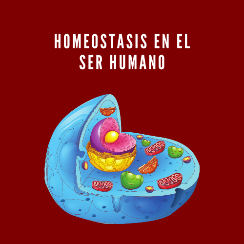 Homeostasis en el ser humano