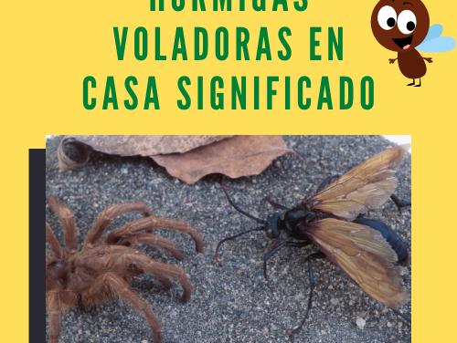 Hormigas Voladoras en Casa Significado