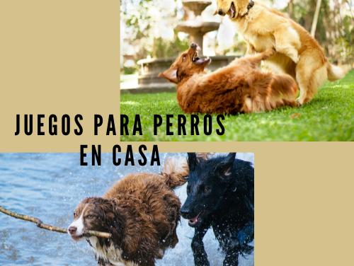 Juegos para Perros en Casa