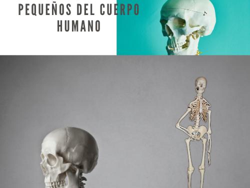 Los Huesos Más Pequeños del Cuerpo Humano