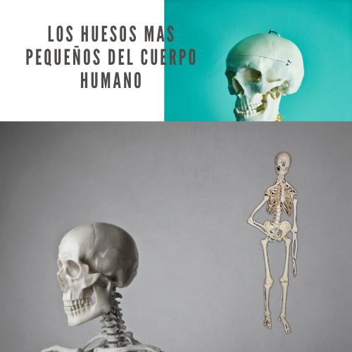 Los huesos mas pequeños del cuerpo humano