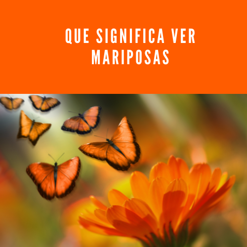Que significa ver mariposas