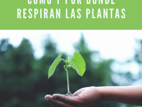 Como y por donde respiran las plantas