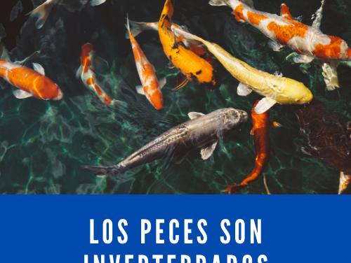 Los peces son invertebrados