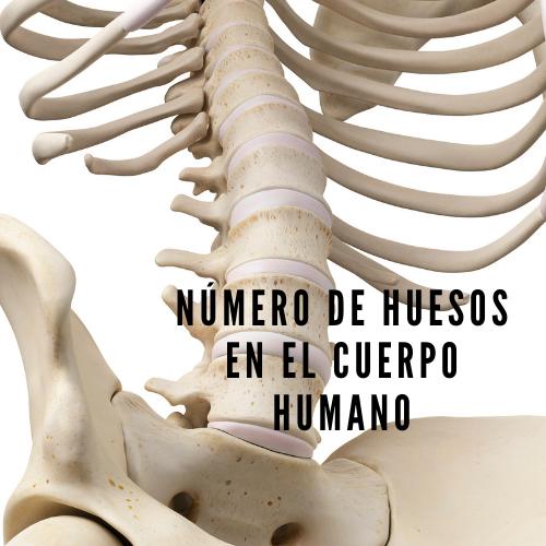 Número de huesos en el cuerpo humano